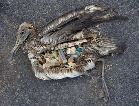 vad innehåller plast
